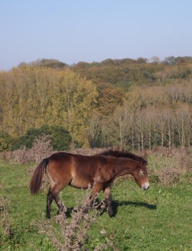 547 - kopie - het 4de paardje wordt gelost.JPG