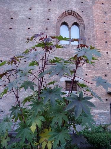 Torino 2015-4 016 - kopie.JPG