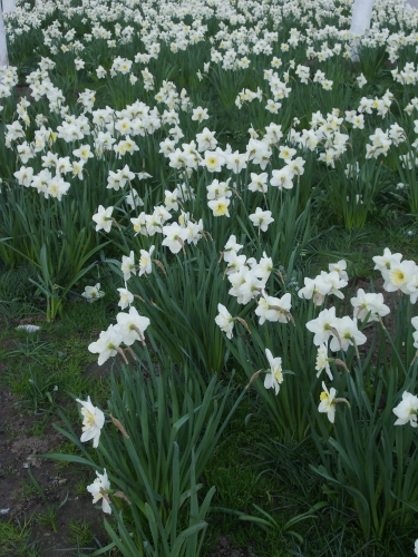 bruxelles,printemps