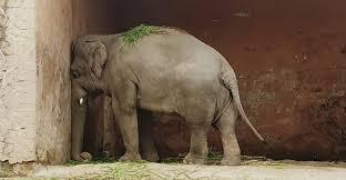 Free Kaavan the Elephant - Home | Facebook